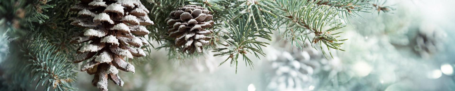 winter-small-header.jpg
